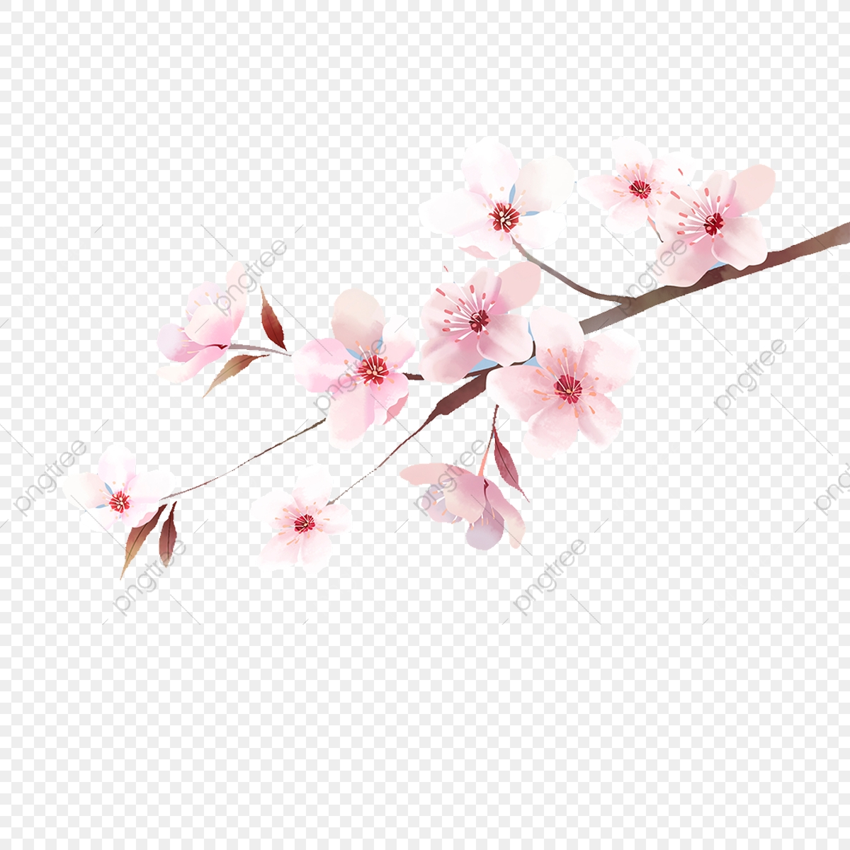 Japanese clipart japan cherry blossom. The illustrations of blossoms