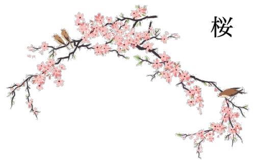 Flowers transparent cherry blossoms. Japanese flower png