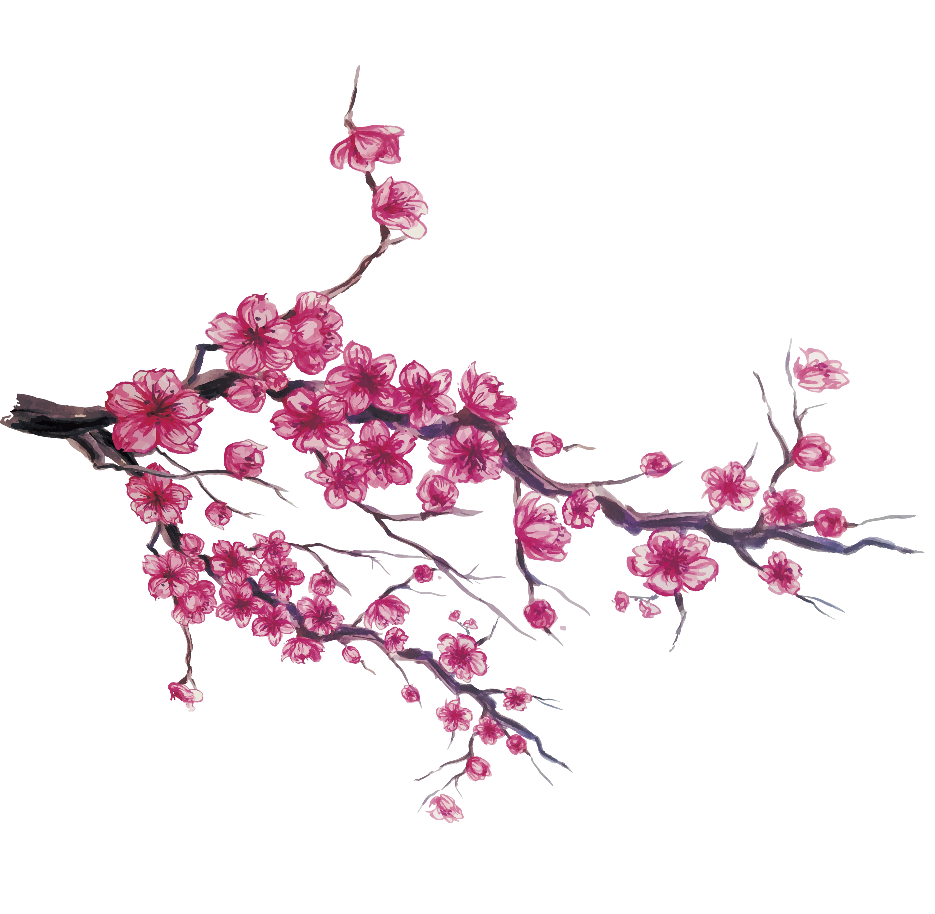 Japan cherry blossom download. Japanese flower png