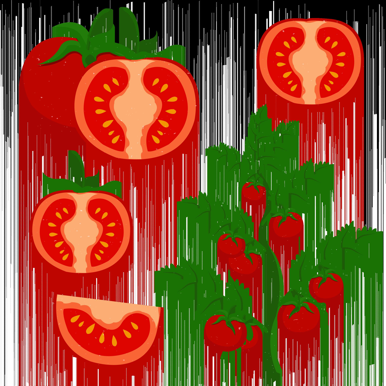 Mango clipart cherry. Tomato clip art grow