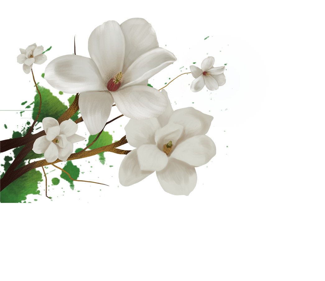 Jasmine flower png. Cape download lily transprent
