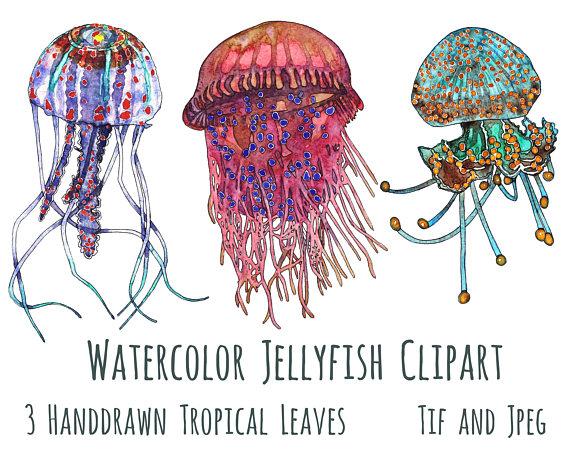 3 clipart jellyfish. Clip art sea life