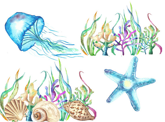 Pin on products . Jellyfish clipart animal shell