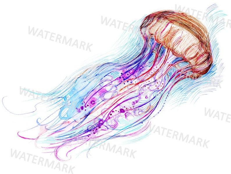 Jellyfish clipart watercolor. Illustration digital jpg commercial
