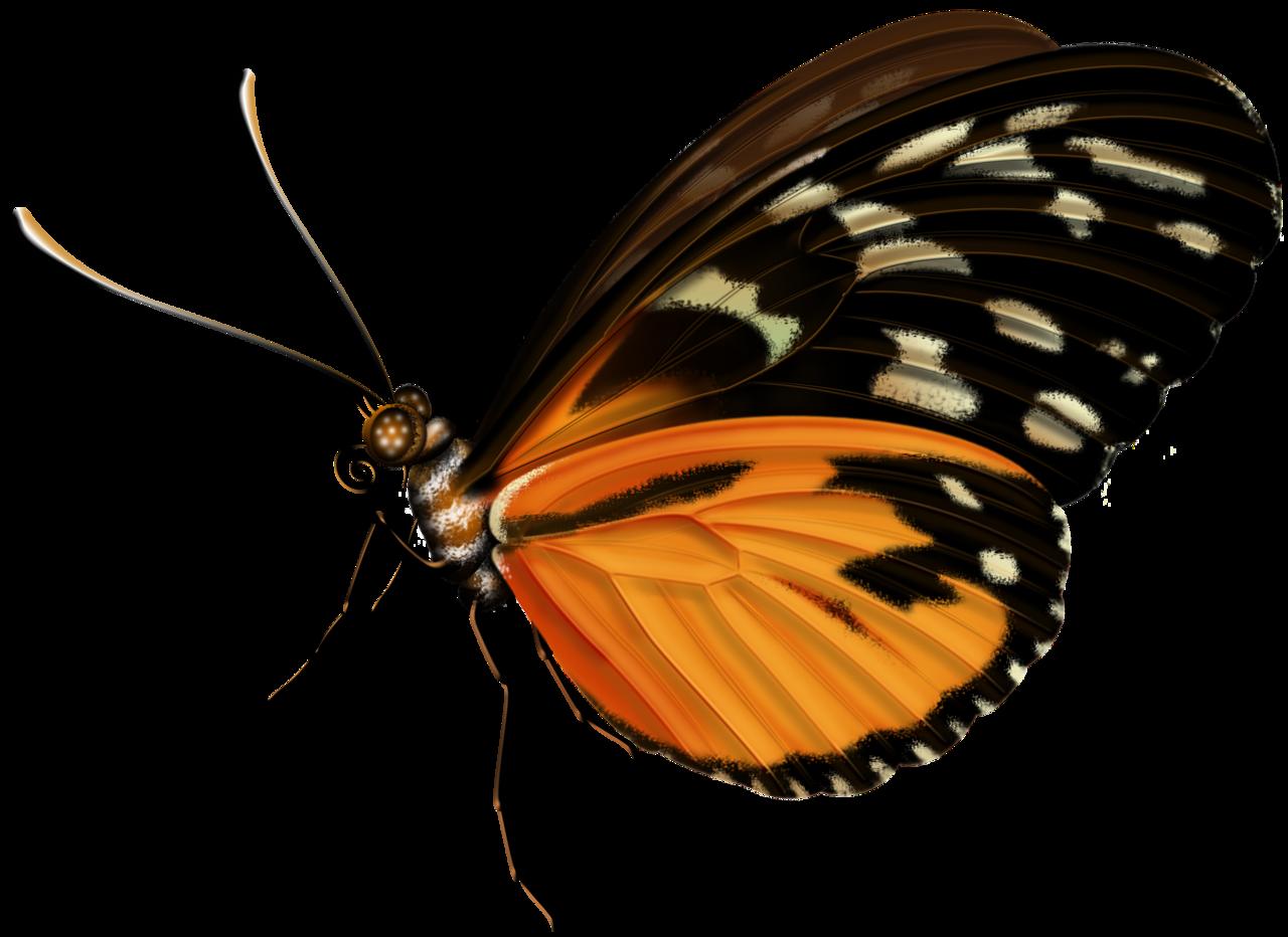 June clipart butterfly garden, June butterfly garden ... (1280 x 932 Pixel)