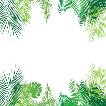 Palm tree vector png. Leaves images vectors and