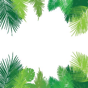 Palm leaves images vectors. Jungle border png