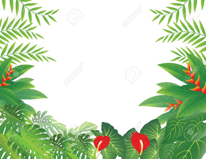 Jungle clipart borders. Rainforest border free images