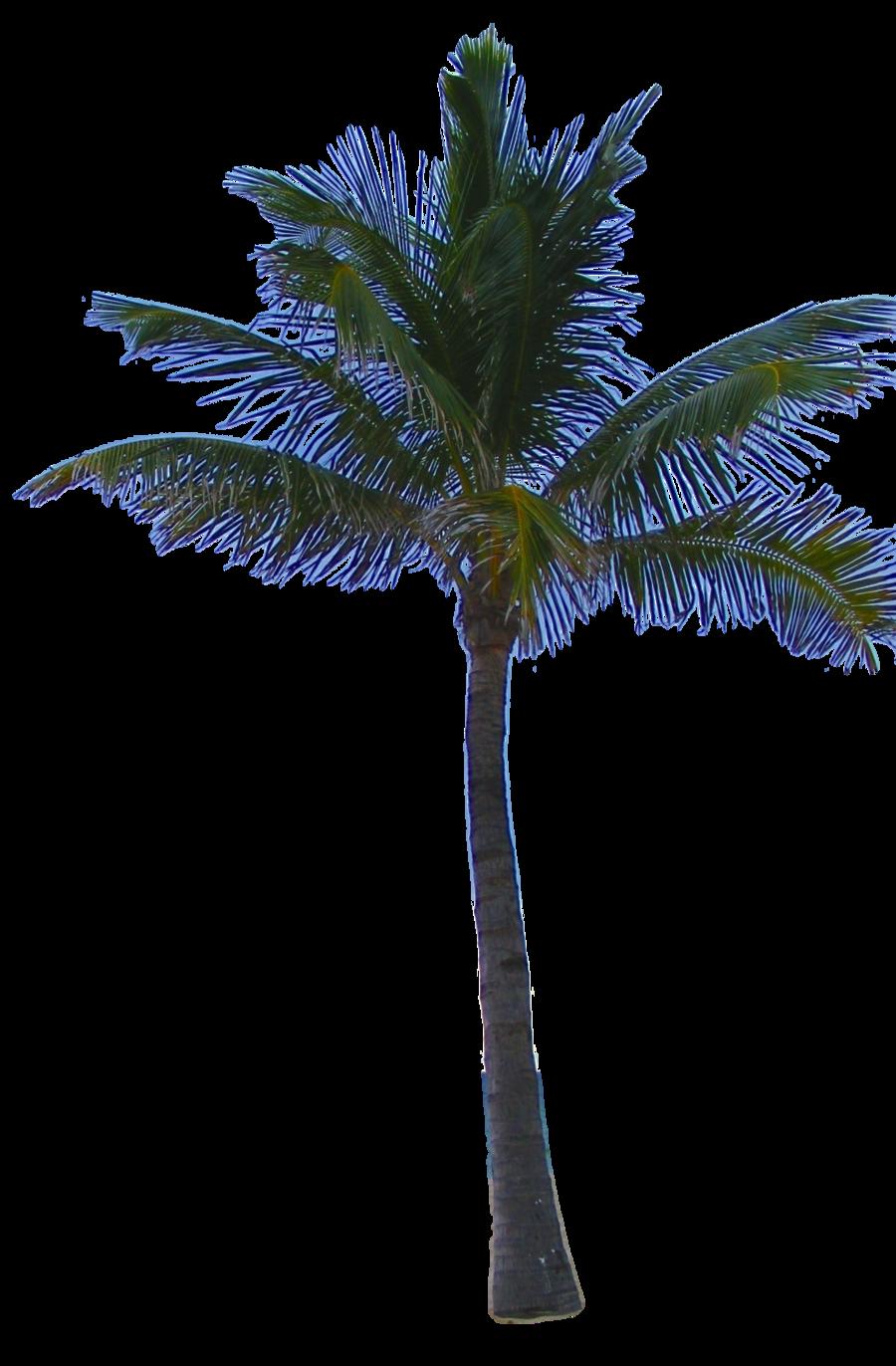 Jungle tree png mart. Palm clipart fern
