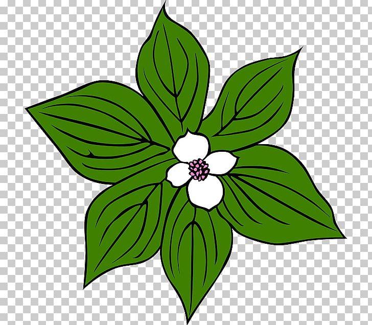 Jungle clipart flora. Tropical rainforest plant png