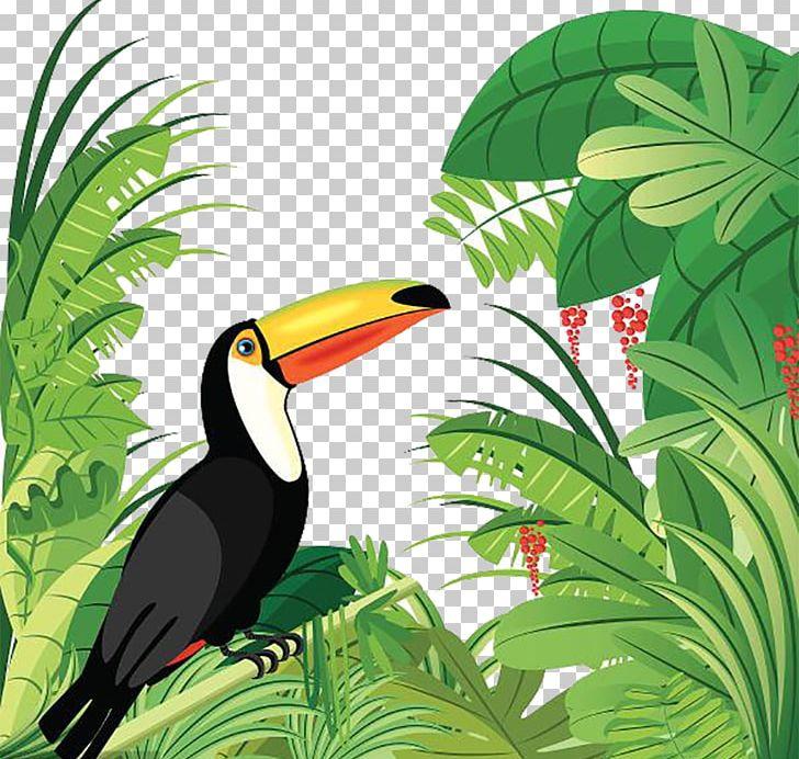 Toucan clipart rainforest creature. Amazon tropical forest bird