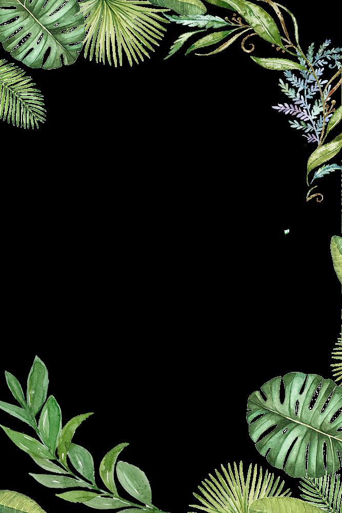 Leaf border png. Plants tropical jungle leaves