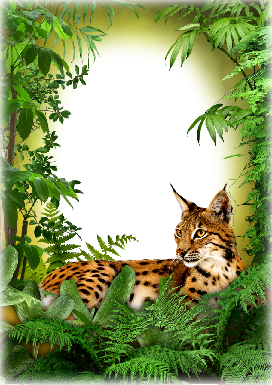 Photo cat frames pinterest. Jungle clipart nature frame