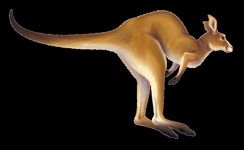 Kangaroo clipart cartoon. Free images black and