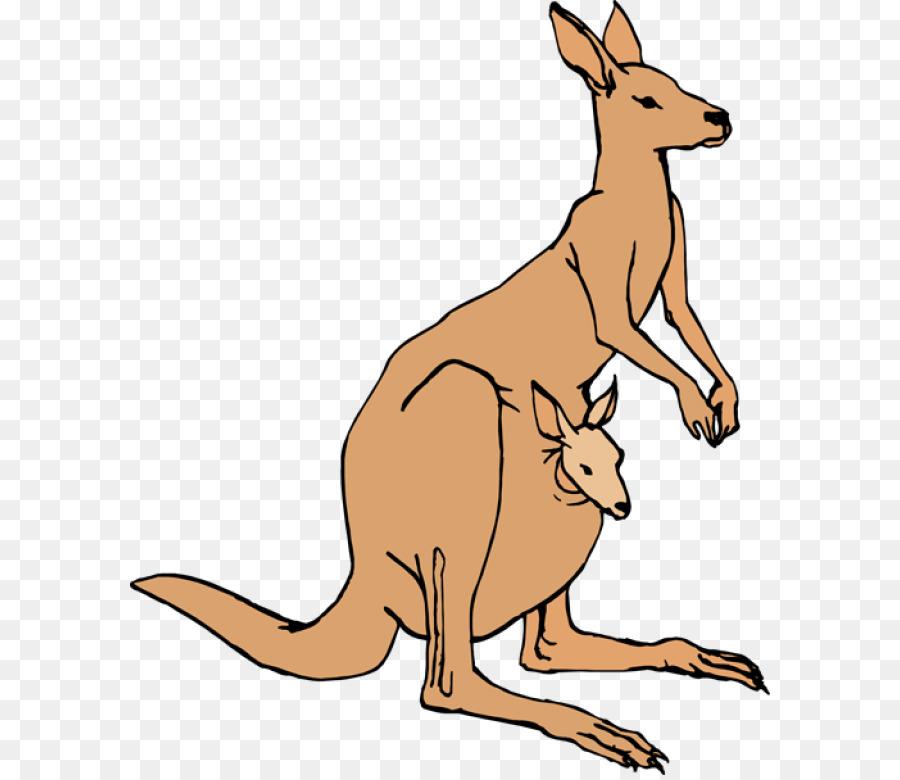 Cartoon png download free. Kangaroo clipart kangaroo pouch