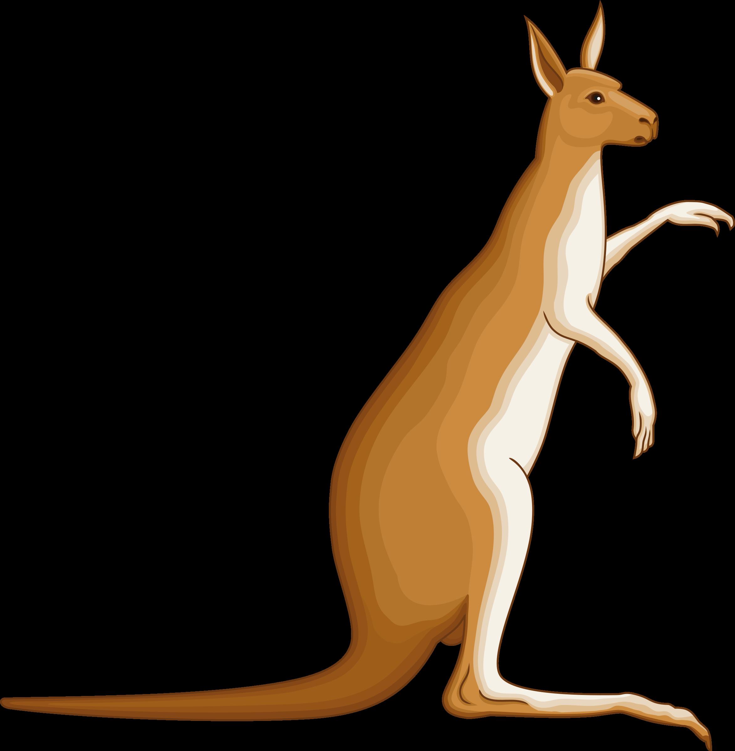 Big image png. Kangaroo clipart mammal