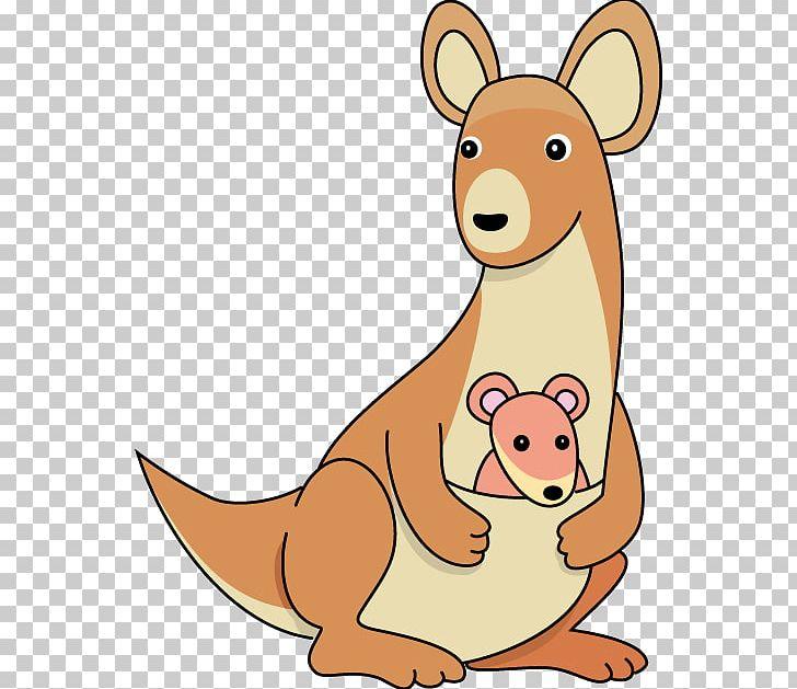 Free content png animal. Kangaroo clipart mammal