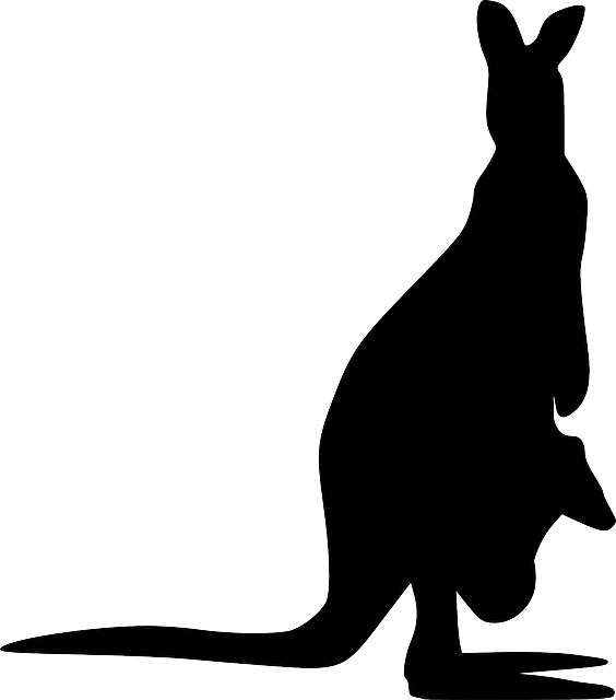 Free images on pixabay. Kangaroo clipart silhouette