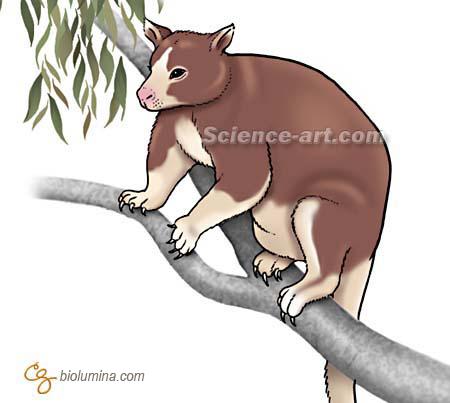 X free clip art. Kangaroo clipart tree kangaroo