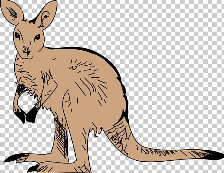 Baby jungle animals png. Kangaroo clipart zoo animal