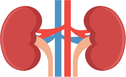 Michigan urological surgery improvement. Kidney clipart body