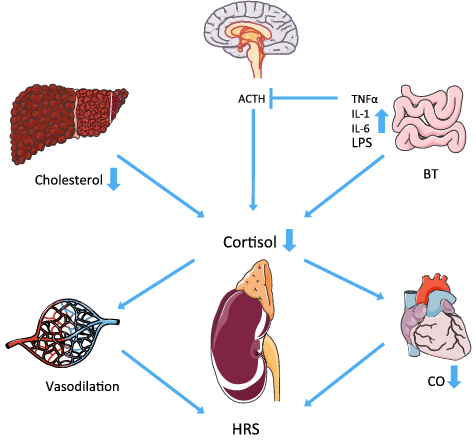 Kidney clipart cirrhosis. Adrenal incompetence in and