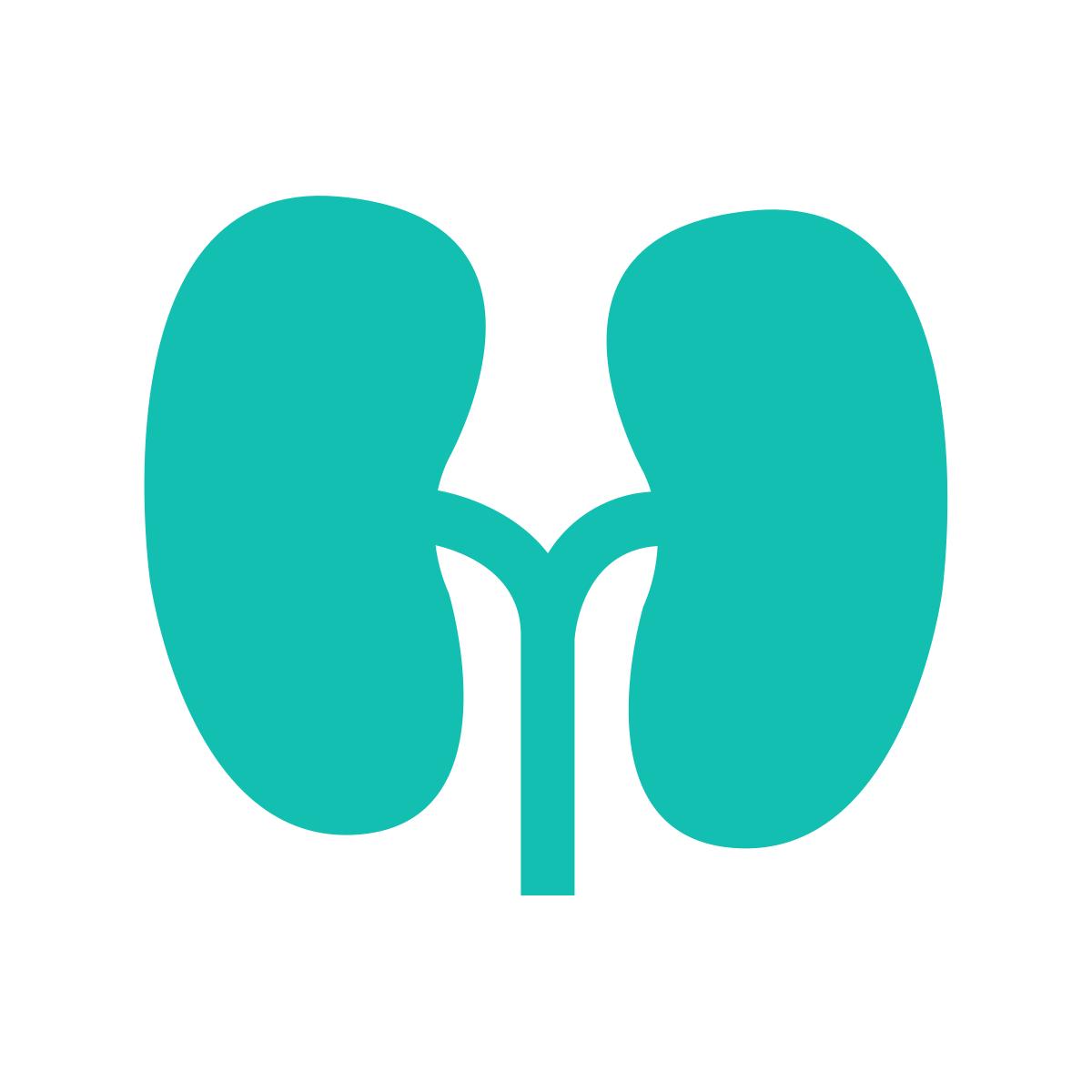 Panel uk health screening. Kidney clipart healthy kidney