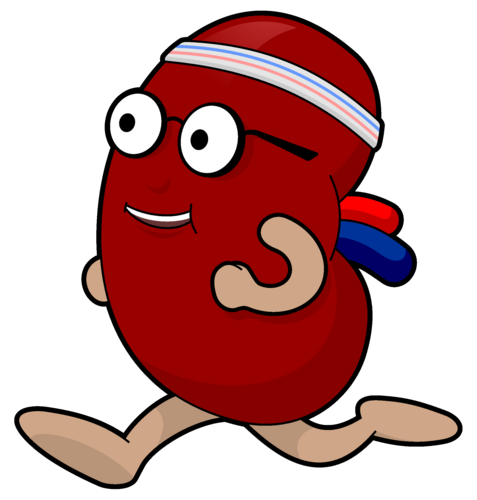 Kidney clipart healthy kidney. Health kidneys cliparts free