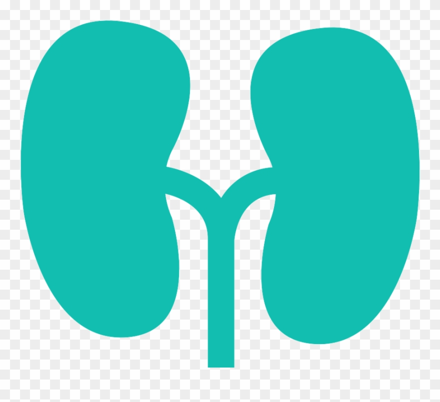 Circle png download . Kidney clipart healthy kidney