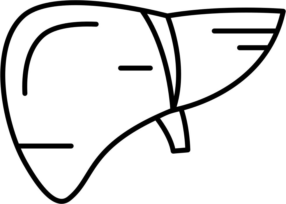 Human drawing at getdrawings. Liver clipart illustration