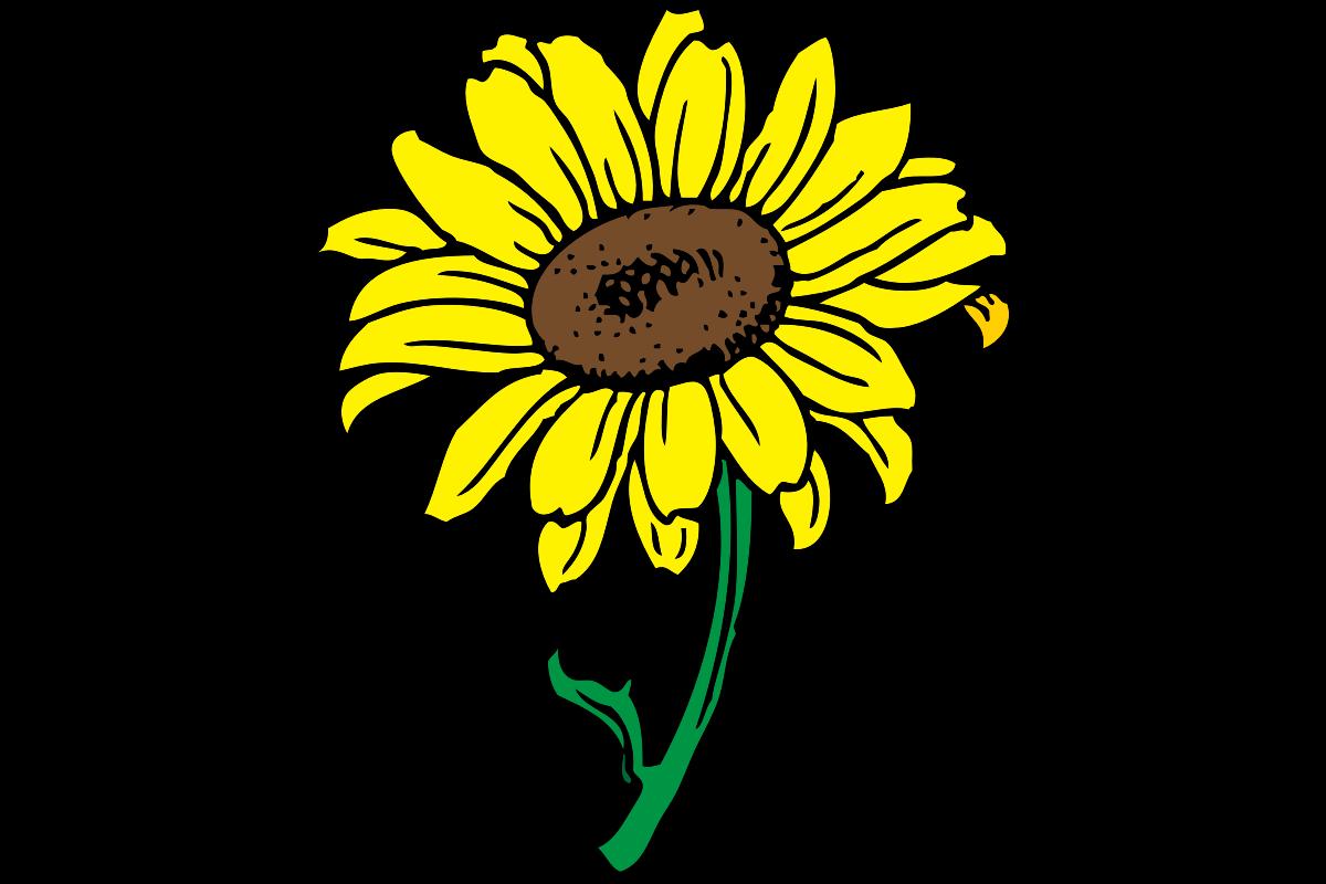 Kindergarten clipart sunflower. Spring break wilson elementary