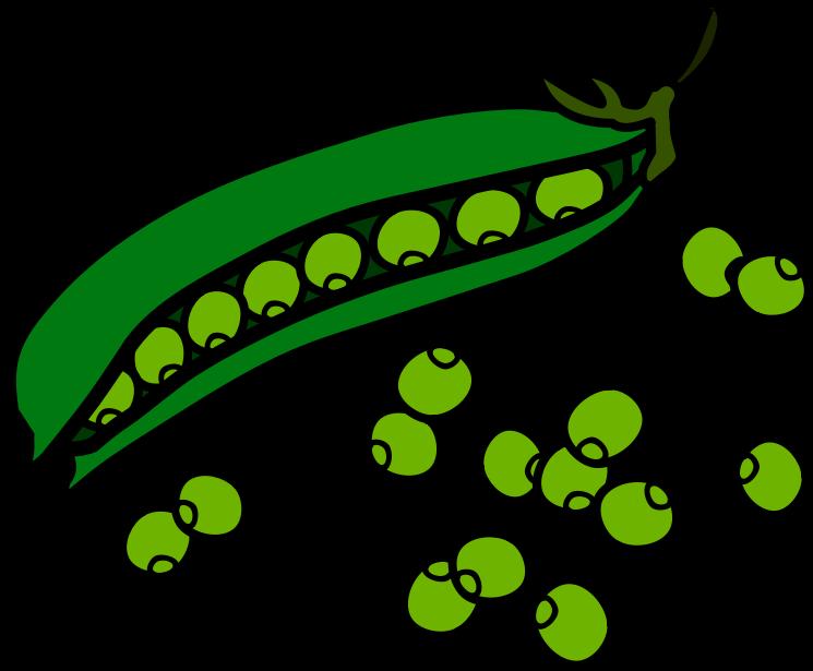 Bean clipart. Sweet pea vine clip