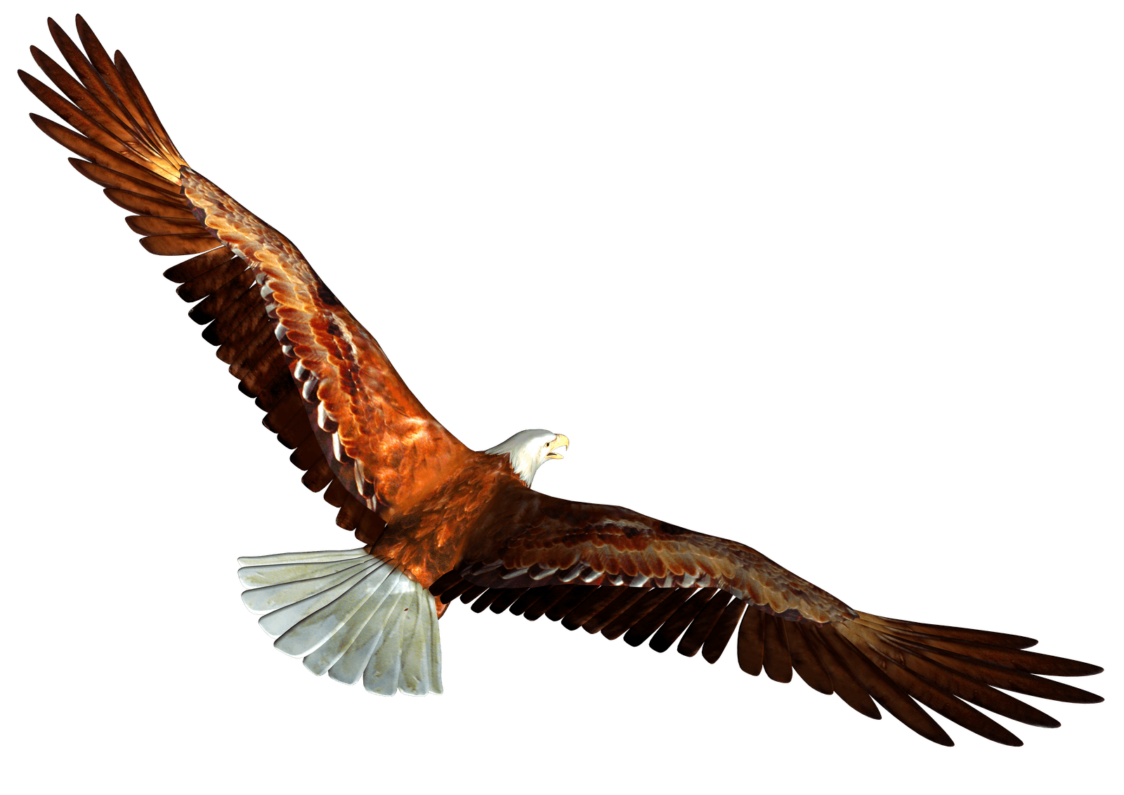 Bald eagle from behind. Kite clipart animated