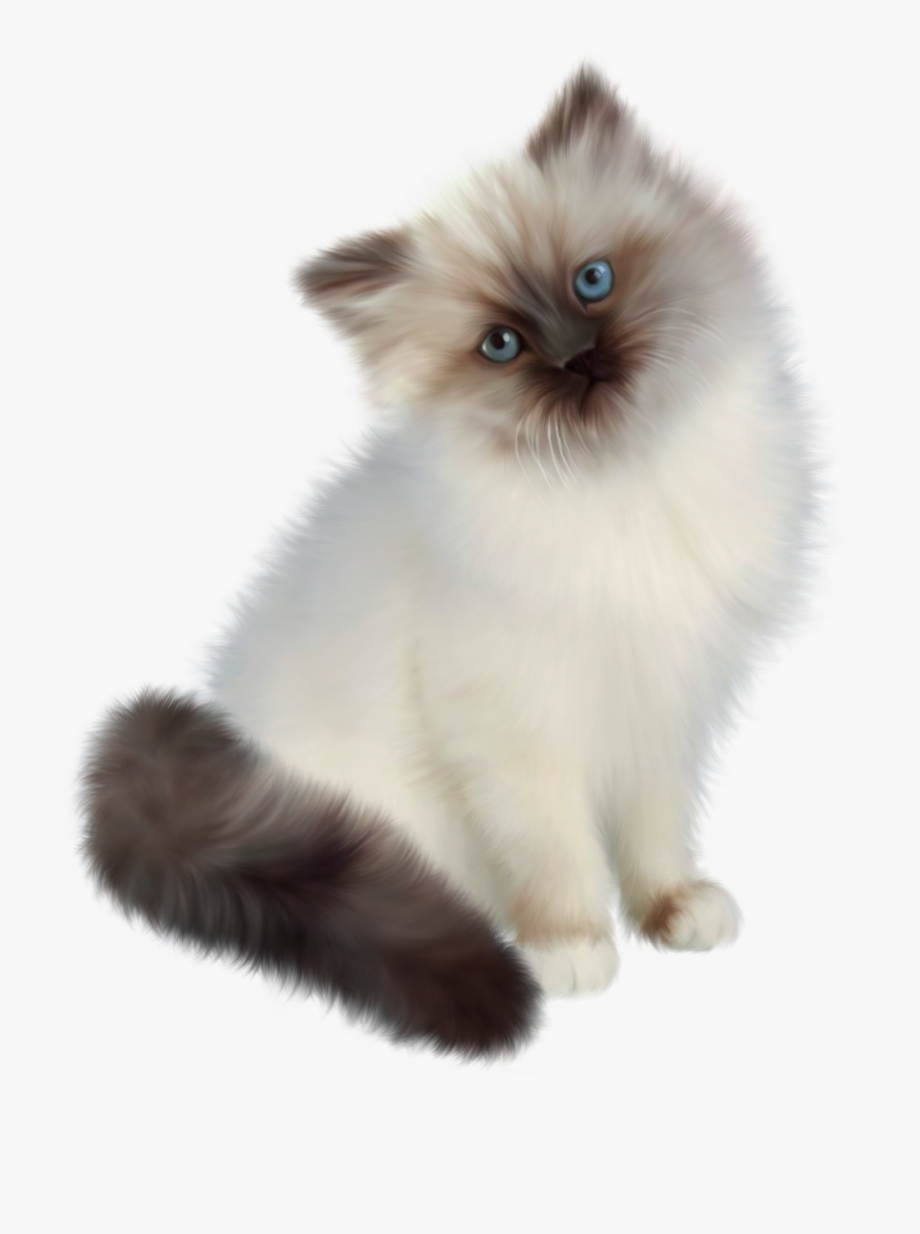White with transparent . Kittens clipart 5 kitten