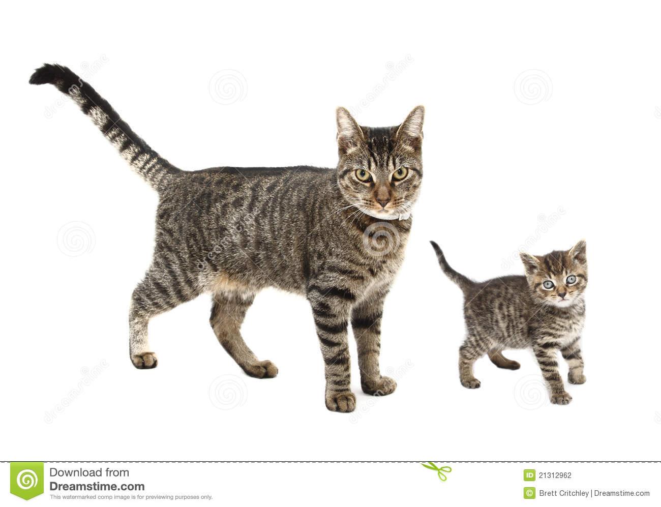 And kitten portal . Kittens clipart 7 cat