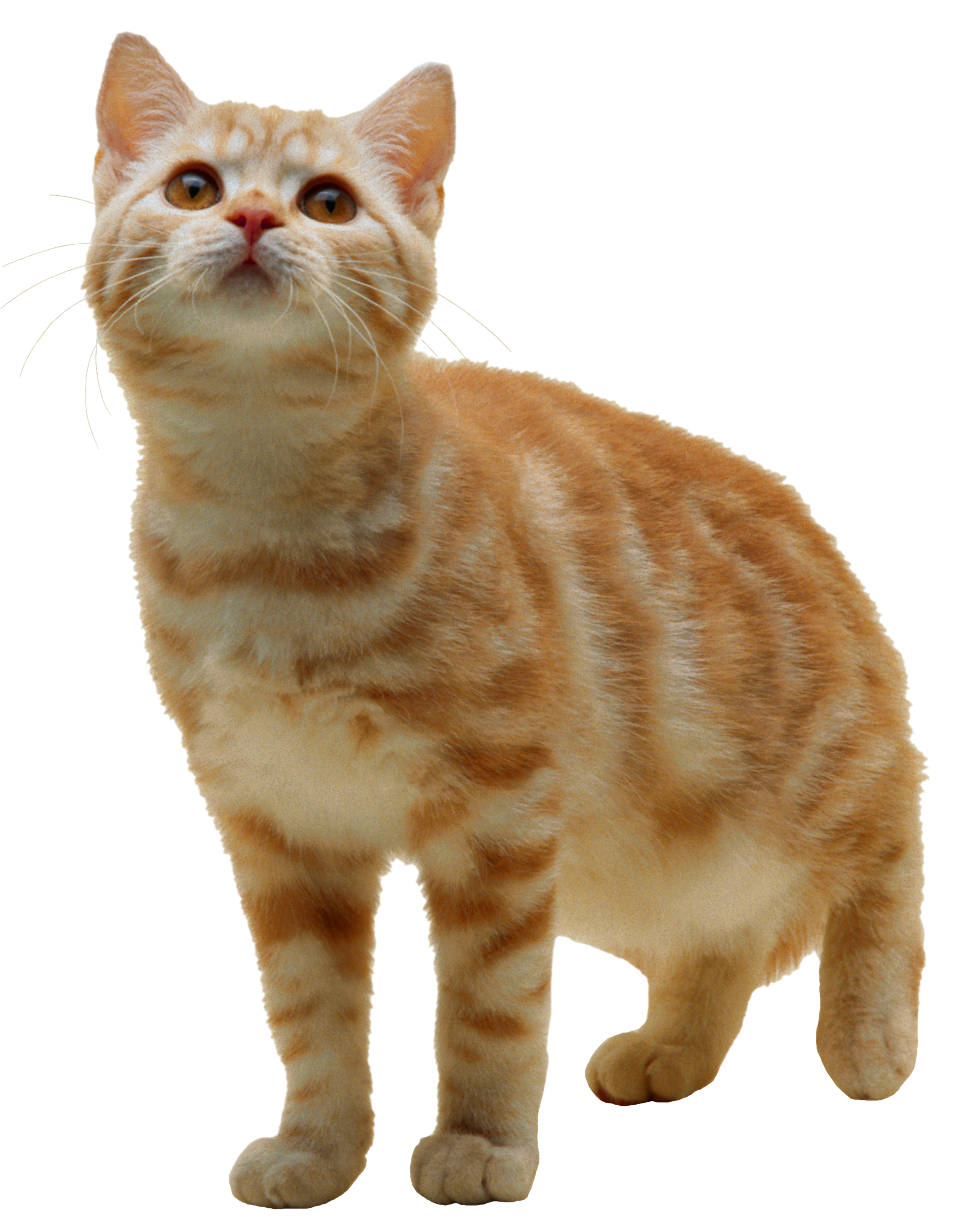 Easy to understand tips. Kitten clipart cat meow