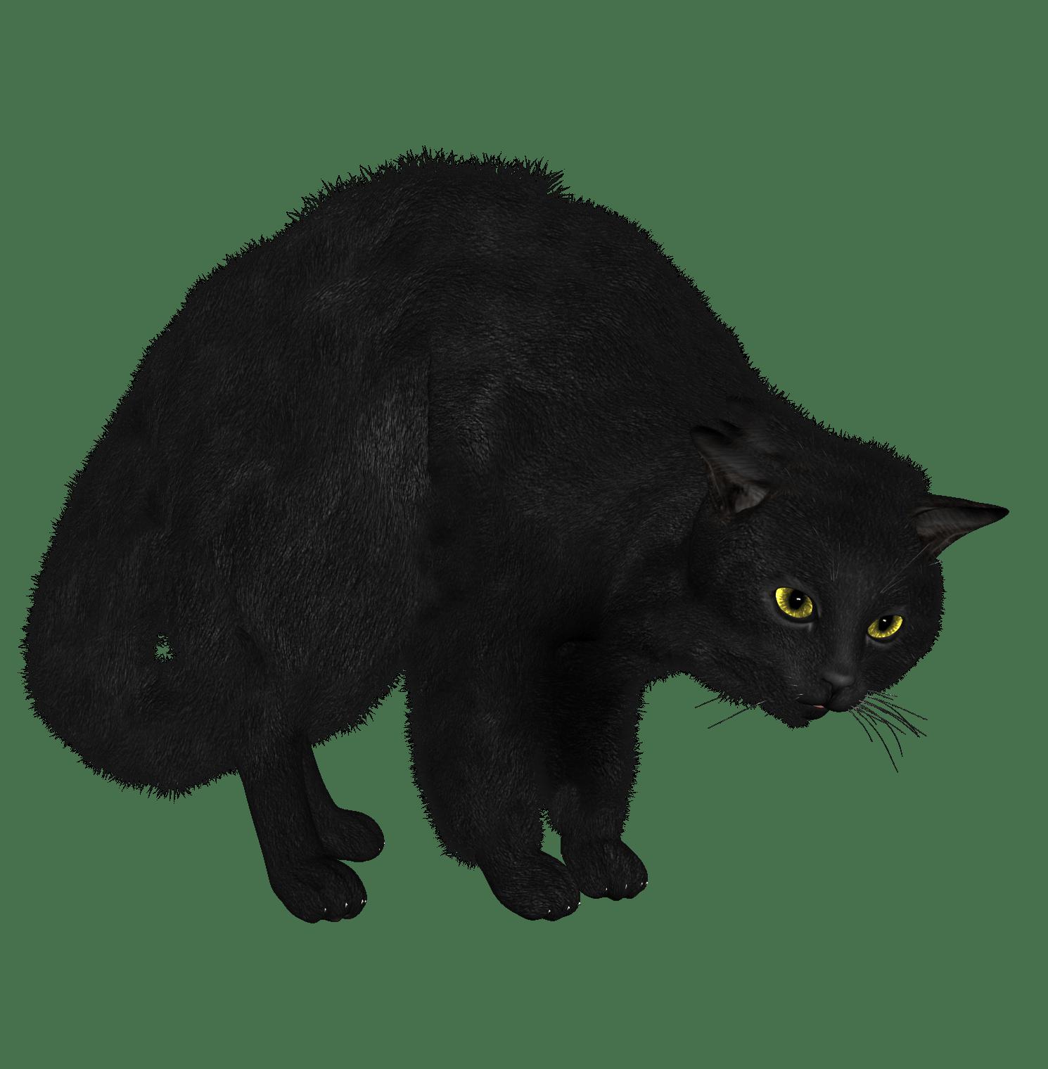 Kittens clipart catblack. Kitten sphynx cat black