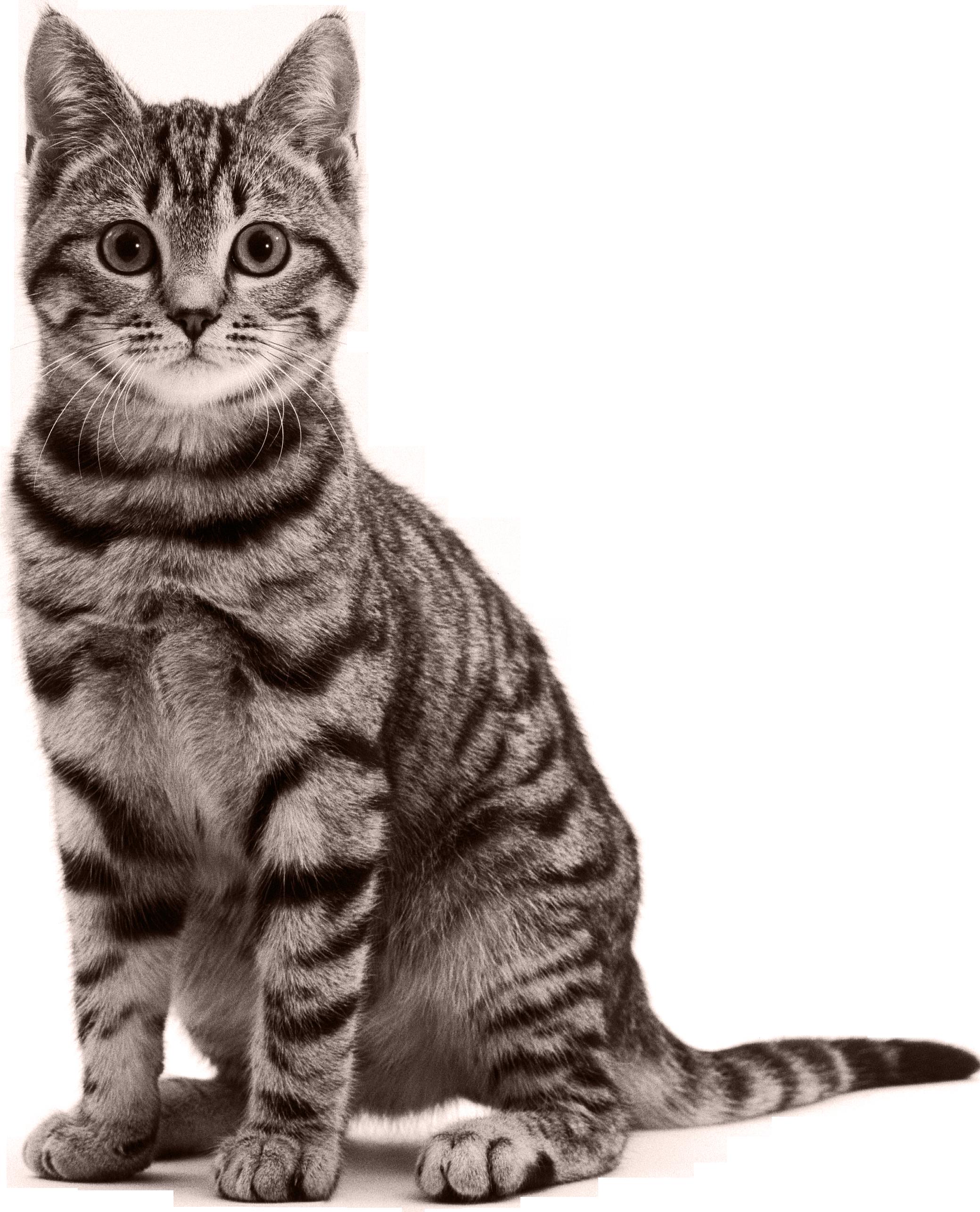 Not cat urls txt. Kittens clipart catl