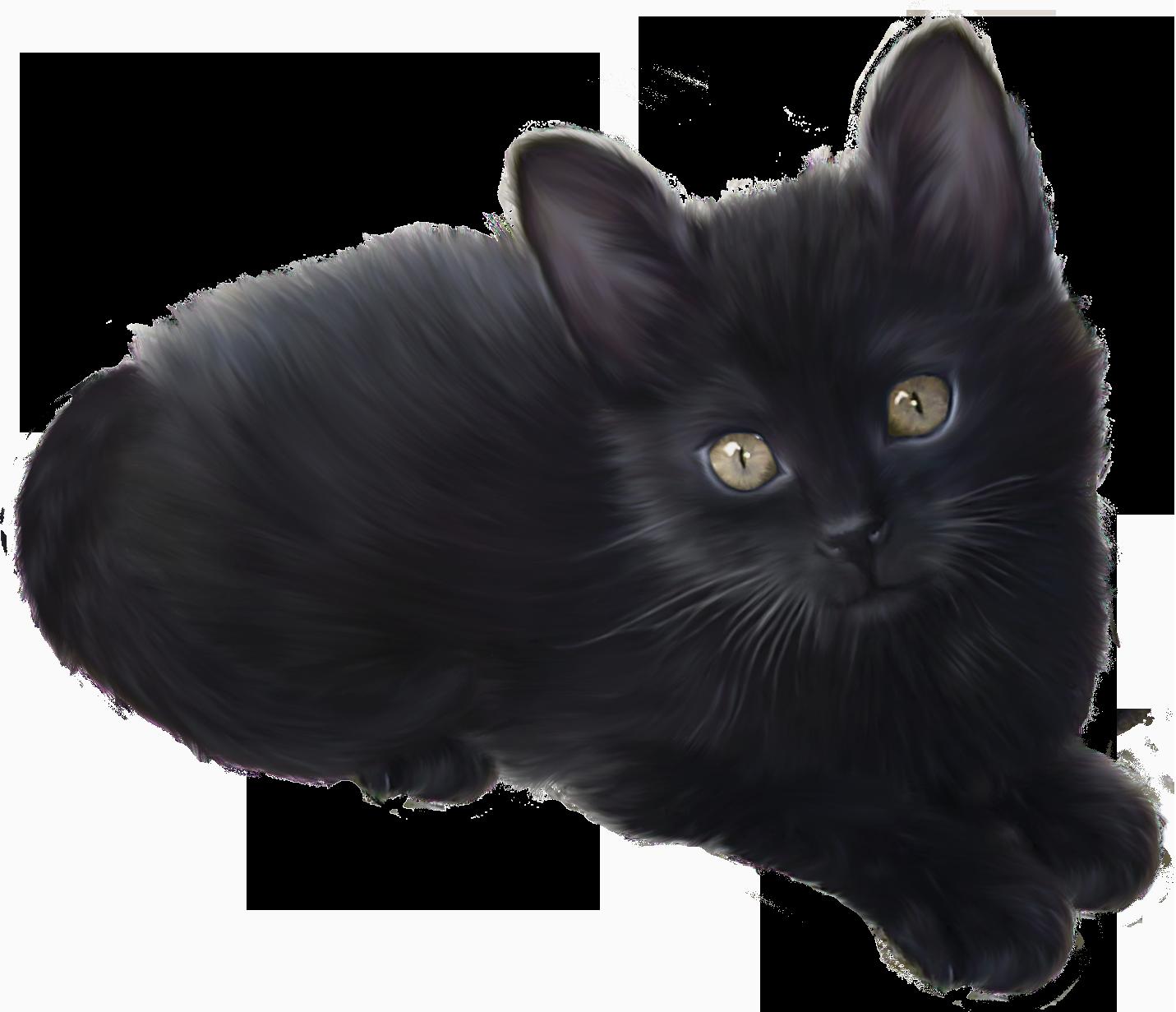 Kitten clipart file. Black png best web