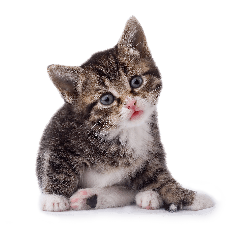 Kitten clipart file.  cat png image