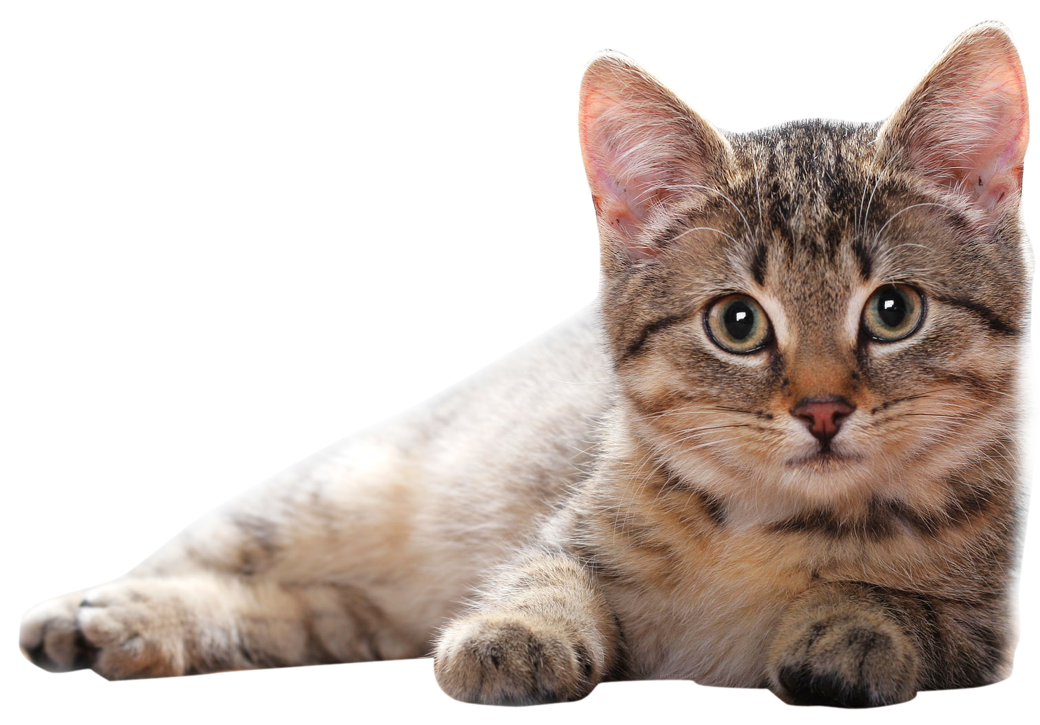 Cats png free images. Kitten clipart file