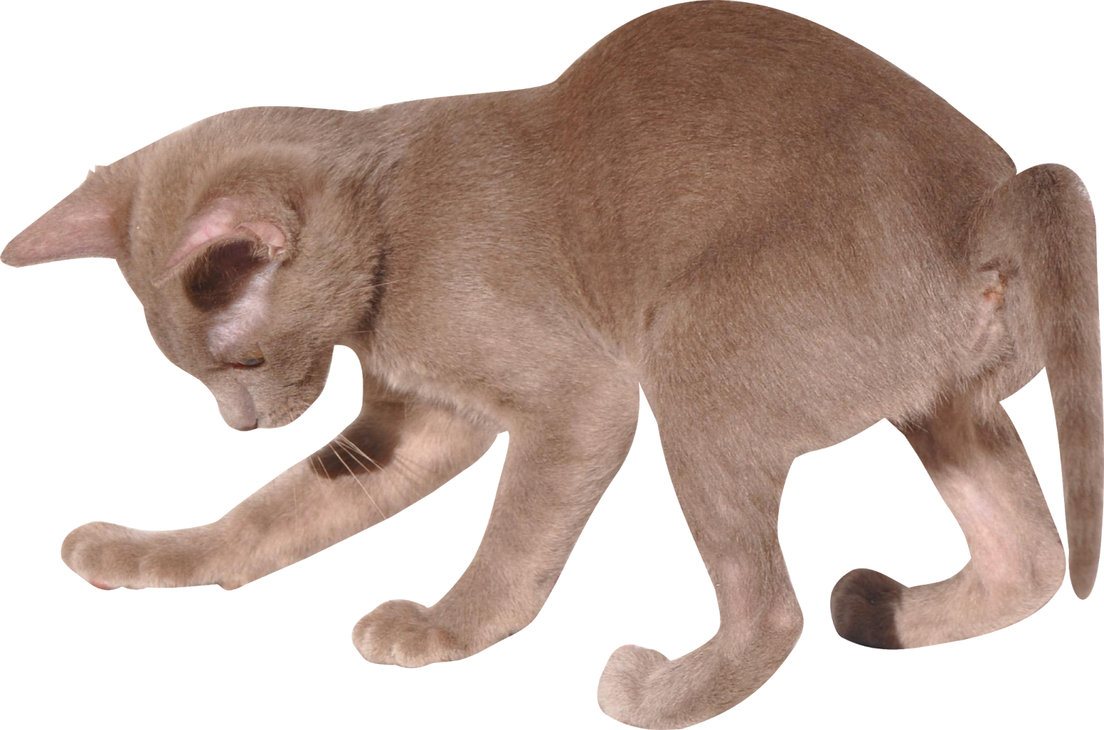 Kittens clipart row. Free cat images digital