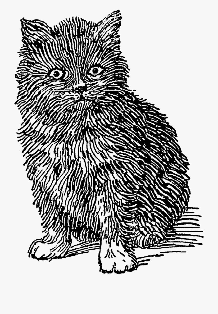 The are and pretty. Kittens clipart fluffy