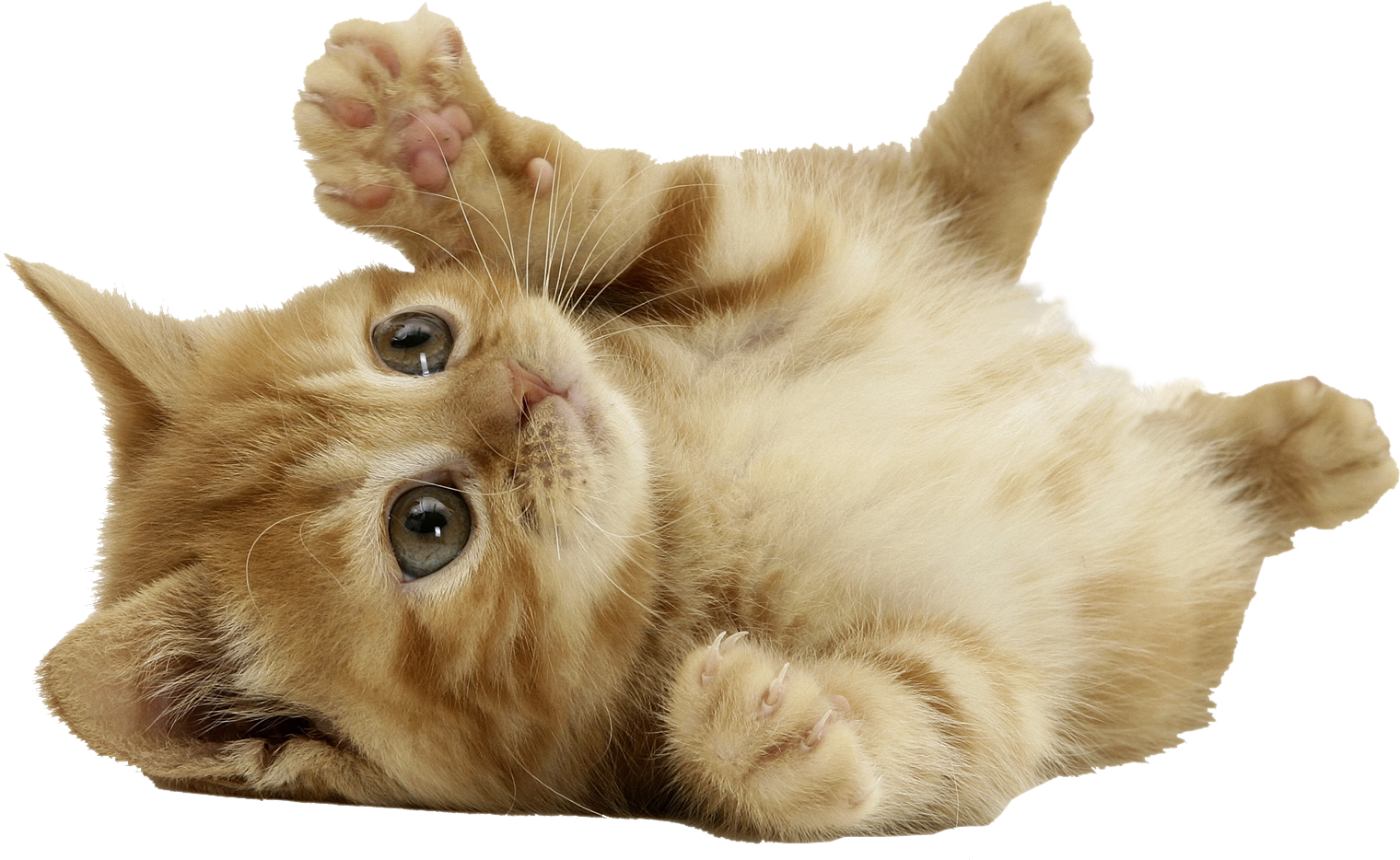 Kitten clipart group cat. Cats png free images