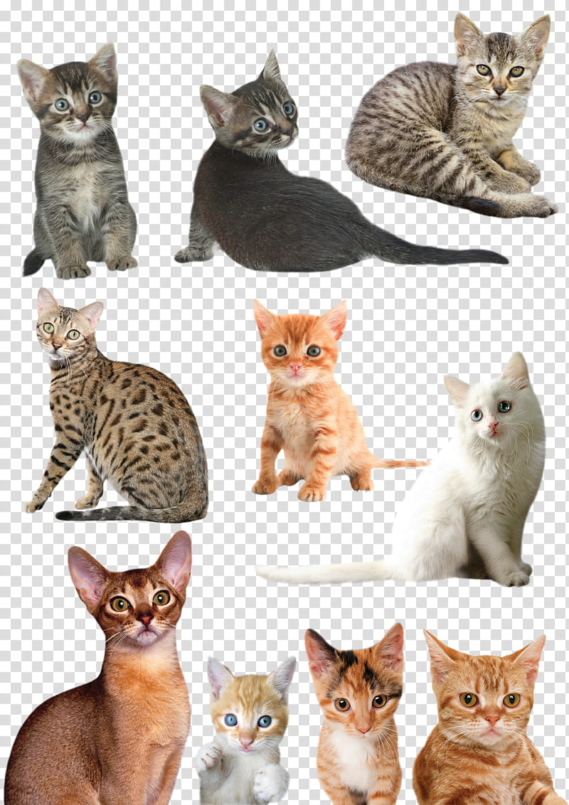 Kitten clipart group cat. Cats and kittens of