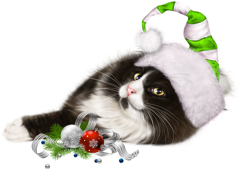 Pin by girly girl. Kitten clipart house cat