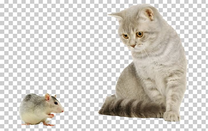 Kitten clipart house cat. Mouse puppy dog png