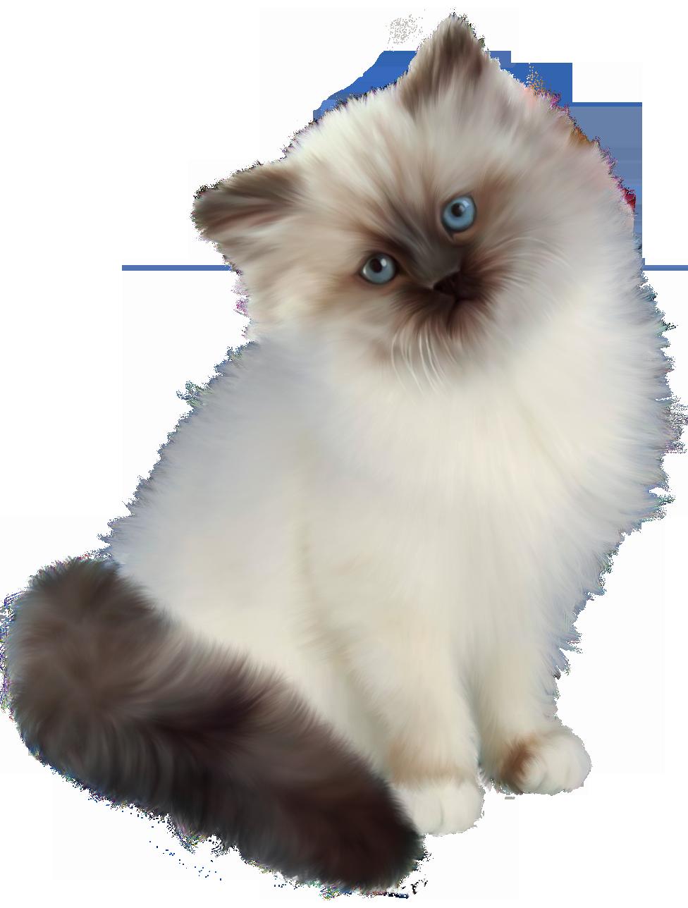Kittens clipart 5 kitten. Transparent png animals clip