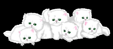 Kittens clipart litter kitten. Persians months to adults