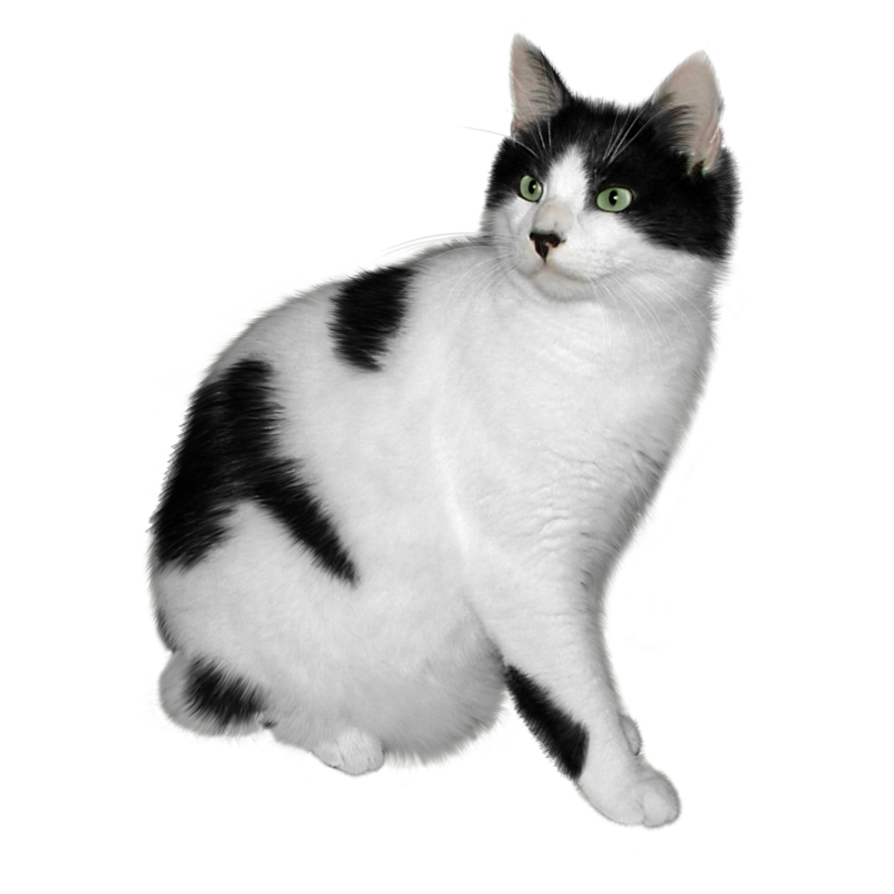 Kittens clipart one cat. Cats png free images